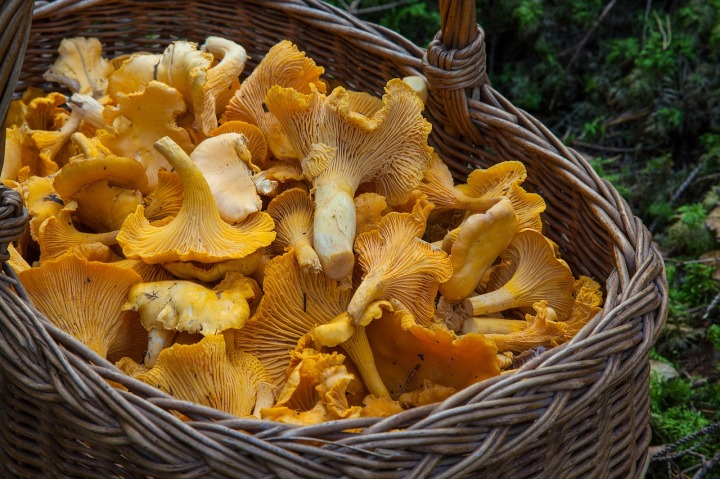 fungus-1194380_1280
